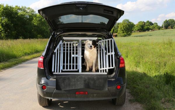 Как перевозить собак в автомобиле
